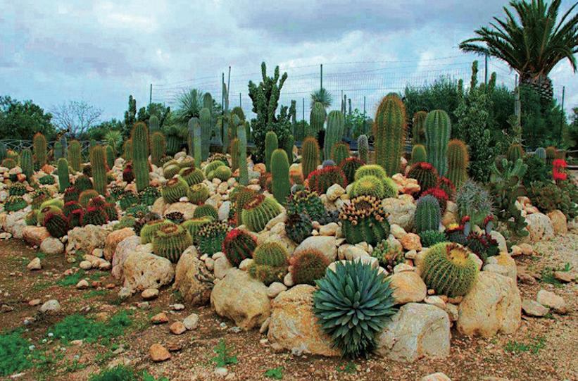 La mostra delle piante pi belle del mondo a lanuvio il for Piante belle da giardino